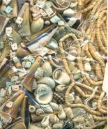Sea Shell Beads Grab Bag 2 - $19.99