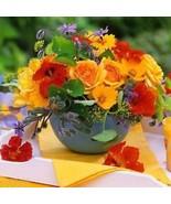 50 STÜCKE Mix Farbe Tropaeolum Majus Samen Creeper Pflanze Bonsai ElR8 01 - $2.00