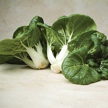 200 Seeds of Toy Choy Hybrid Pak Choi Brassica - £12.21 GBP