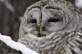 Stock photos 7 owl pictures wallpaper desktop background zip file screen... - $7.50