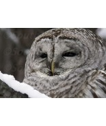 Stock photos 7 owl pictures wallpaper desktop background zip file screen picture - $7.50