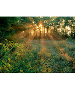 Sunbeams and Goldenrods - Edwin Warner Park - Nashville, Tennessee  - 11 x 14 Ph - $15.00