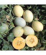 1M Seeds of Papayadew Melon - $219.98