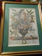"Floral Print by Rob Furber Gardiner of Kensington- JANUARY  Frame 17.75""... - $24.20"