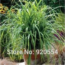 Imported seed,5 pcs/lot Carex(Carex pendula Fresh Look) seeds bonsai plant DIY h - $15.18