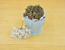 Springtime planter/ Pastel blue planter/succulent planter/ Saucer and drainage - $17.00