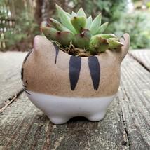 "Ceramic Cat Planters, set of 6, 2.5"" Animal Pots, Emotion Face Kitten Kitty image 9"