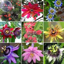Best Price 20 Seeds Mixed Passiflora Flowers,Diy Flower Seeds QC317M Dg - $5.29