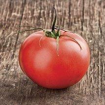 1000 Seeds of Beefmaster Hybrid Tomato - Solanum Lycopersicum - $79.16