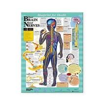 Blueprint for Health Your Brain/Nerves Chart - $13.79