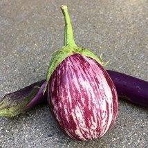 20 Packet Seeds of Zebra Eggplants - $18.81