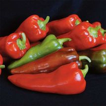 SHIP From US, 100 Seeds Carmen Hybrid Sweet Pepper, DIY Healthy Vegetabl... - $48.99