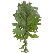 1/2 Oz Seeds of Bolshoi Kale - $39.50