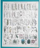 BOTANY Grasses Aquatic Plants Lotus Bamboo Papyrus Sedge - 1843 HC Color... - $44.96