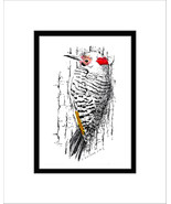 Northern Flicker Pen and Ink Print, Woodpecker - $29.00