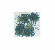 Elegant  Real  DRIED FLOWERS  TURQUOISE - $3.60
