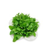 SHIP FROM US 2,8 Million Arugula Culinary Herb Seeds, ZG09 - $224.36