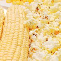 SHIP From US, 10 Seeds Snow Puff Hybrid F1 Popcorn, DIY Healthy Vegetabl... - $18.99