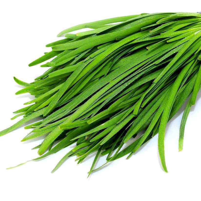 Primary image for SHIP From US, 1 gram 180 Seeds Garlic Chive Herb, DIY Herb Seeds ZJ01