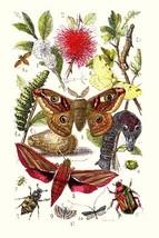 Emperor Moth, Elephant Hawk Moth, Tortoise Beetle by James Sowerby - Art Print - $19.99+