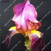 100 Pcs Rare Purple Black Iris Seed Japanese Blooming Unique Attractive ... - $2.18
