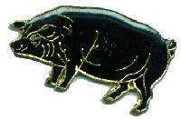 12 Pins - BLACK HOG , pig hogs sow hat lapel pin #4567