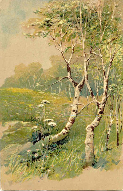 The Meadow Paul Finkenrath of Berlin 1910 Post Card