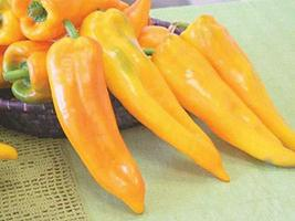 Corno Di Toro Yellow Sweet Pepper Seeds 100 Seeds Garden Seeds Plant See... - $31.68