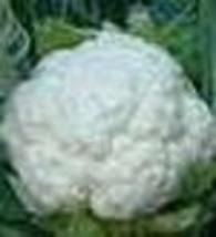 Cauliflower - Snowball Y Improved - Non-Hybrid - St. Clare Heirloom Seeds - $2.25