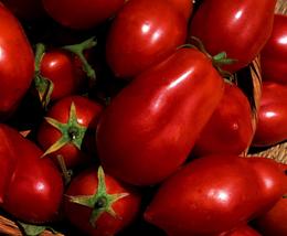 1000pcs Very Yummy Edible Tomato 'San Marzano' Vegetable Seeds IMA1 - $17.99