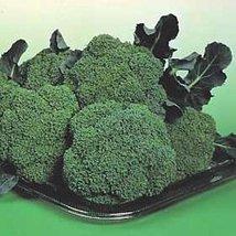 50 Seeds of Broccoli Premium Crop Vegetable - $17.00