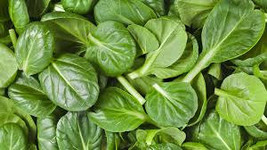 GREEN SPINACH SEEDS 10 Fresh vegetable seeds ready to plant in your garden - $1.99