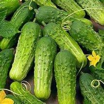 50 Seeds Boston Pickling Cucumber Non-gmo Heirloom Seeds - $2.97