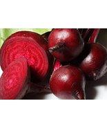 Bulk Organic Bulls Blood Beet Seeds (10 lb) - $545.44