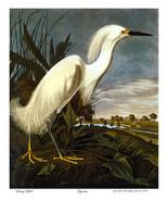 Audubon  Snowy Egret  22x30 Hand Numbered Ltd. Edition Art Print Birds - $81.09