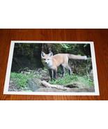 RED FOX KIT PHOTO PHOTOGRAPH 10 x 15 - $24.99