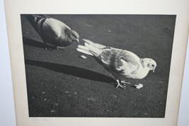 VINTAGE BLACK & WHITE SILVER GELATIN PHOTOGRAPH ~ TITLED CRUMBS ~  PIGEON BIRD image 1