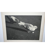 VINTAGE BLACK & WHITE SILVER GELATIN PHOTOGRAPH ~ TITLED CRUMBS ~  PIGEO... - $45.00