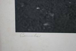 VINTAGE BLACK & WHITE SILVER GELATIN PHOTOGRAPH ~ TITLED CRUMBS ~  PIGEON BIRD image 3
