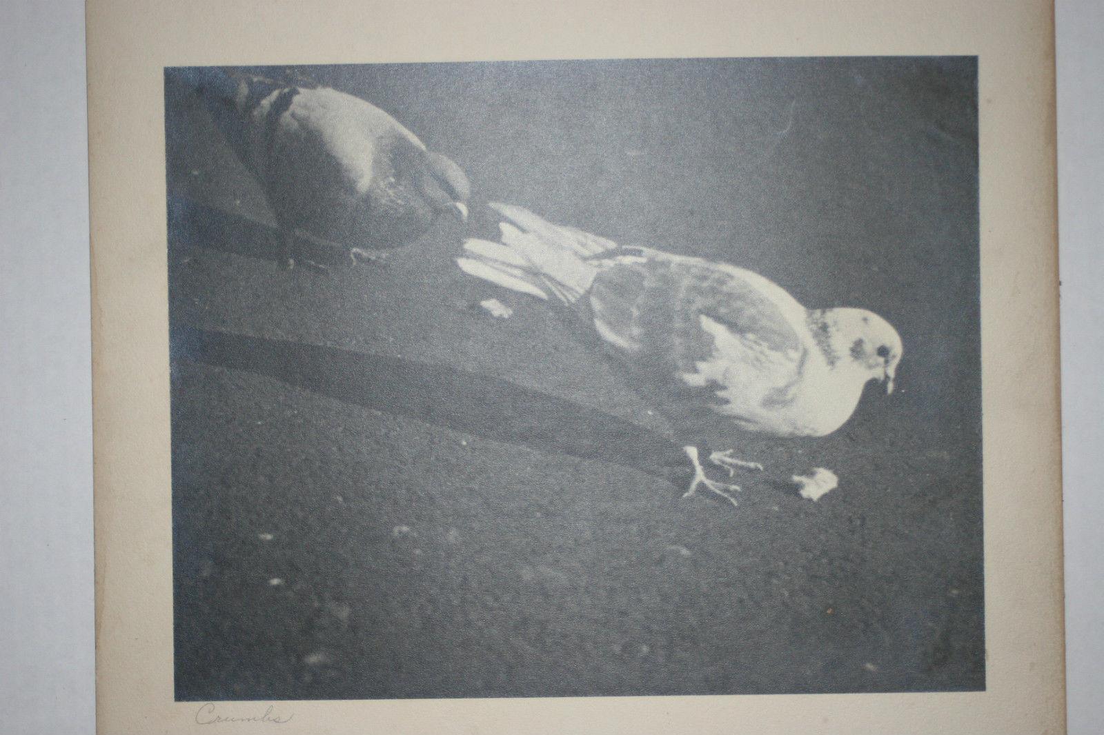 VINTAGE BLACK & WHITE SILVER GELATIN PHOTOGRAPH ~ TITLED CRUMBS ~  PIGEON BIRD image 2
