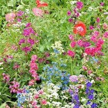 2000+PARTIAL SHADE WILDFLOWER MIX 18 Different Flower Seeds Butterfly So... - $2.50