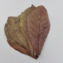 Pack of 10 Indian Almond Leaves Terminalia Catappa Ketapang Shrimp Fish ... - €6,07 EUR
