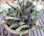 61dwz8khirl. sl1500  thumb155 crop