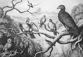 ANIMALS Council of Birds Meet on Tree Branches - 1811 Original Etching P... - $21.60
