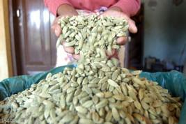 25 Mixed Lot Cardamom Seeds-1305 - $2.98