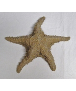 Starfish Shell Authentic-8 1/2 Inches-Dried-Nautical Décor - $12.99