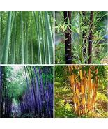 """ 60 PCS Bamboo Seeds Mixed Green Black Purple Yellow Colors GIM "" - $16.32"