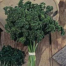 SHIP FROM US ORGANIC MOSS CURLED PARSLEY SEEDS - 2 Lb PACKET SEEDS, HERB... - $237.96