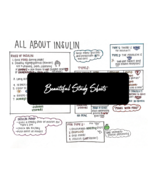 Insulin - NurseExplained - Study Sheets - $1.59