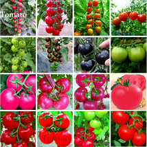 Rare Heirloom Mixed 16 Types Tomatoes S M L sized Red Pink Green Black B... - $7.48